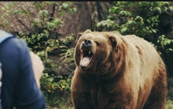 Two persons were injured after bear attacked in Tangmarg