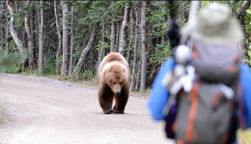 Man Critically Injured After Attacked by Bear