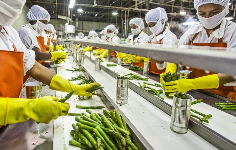 Job in Food Processing Unit In Kashmir: Apply Now